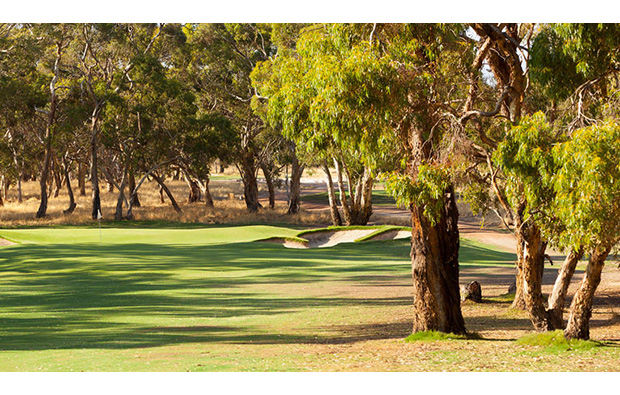 TRee-lined fairways of Tanunda Pines Golf Club